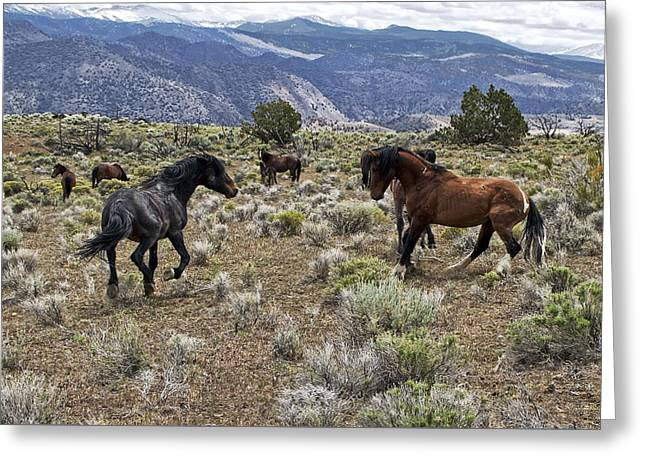 Wild Mustang Stallions Fighting Greeting Card