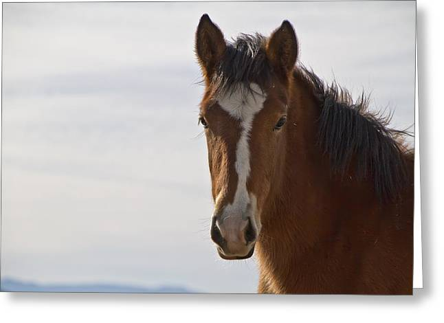 Wild Mustang Yearling Greeting Card