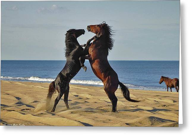 Wild Mustangs Battling On The Beach Greeting Card