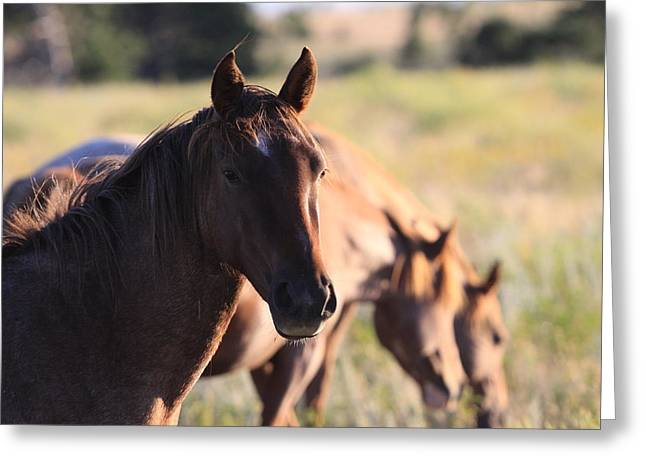 Greeting Card featuring the photograph Wild Mustangs by Kate Purdy