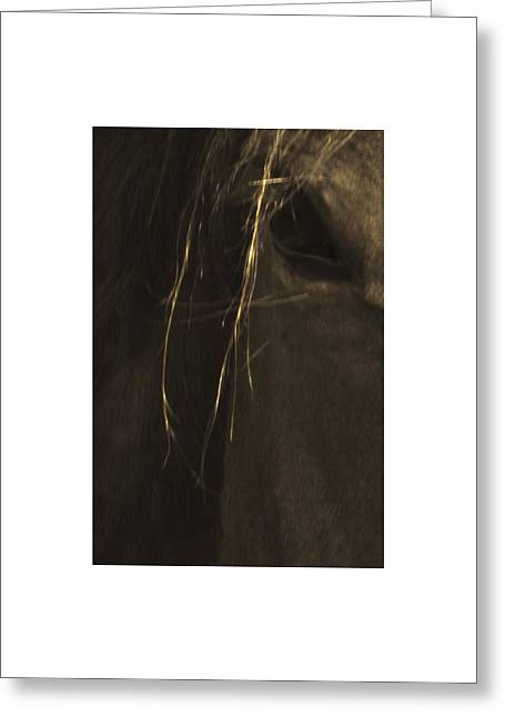 Wild Mustangs Of New Mexico 43 Greeting Card