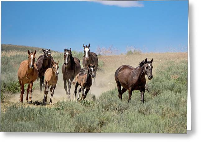 wild mustangs on the run to the water hole in Sand Wash Basin Greeting Card