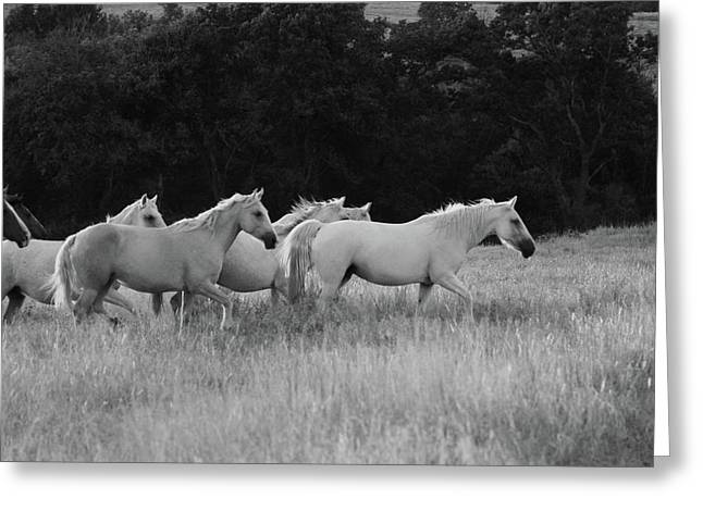 Wild Mustangs Greeting Card by Vonda Barnett