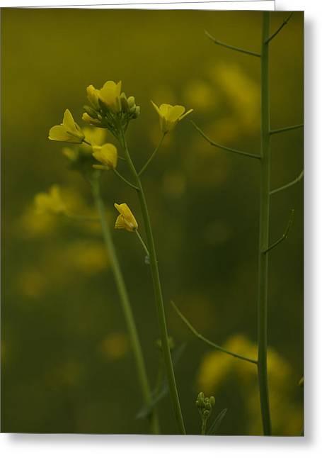 Wild Mustard Greeting Card by Bill Gallagher