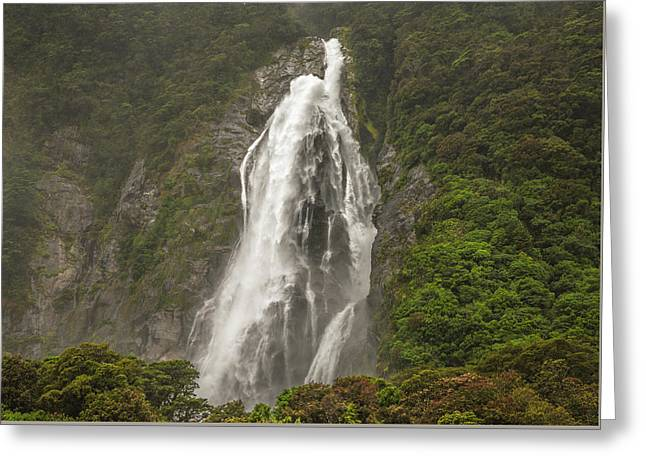 Wild New Zealand Greeting Card
