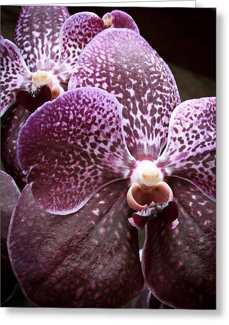 Wild Orchid 1 Greeting Card by Jonathan Hansen