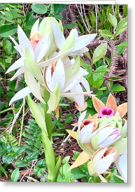 Wild Orchids In Pastel 2 Greeting Card