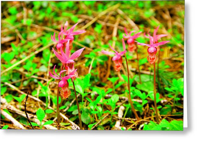 Wild Orchids Greeting Card by Jeff Swan