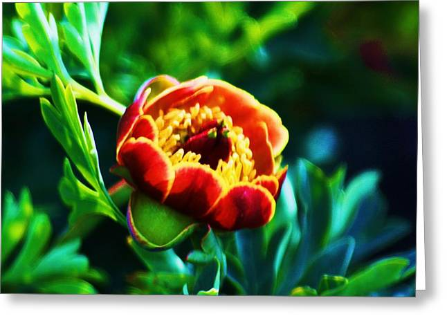 Wild Peony Greeting Card by Russell  Barton