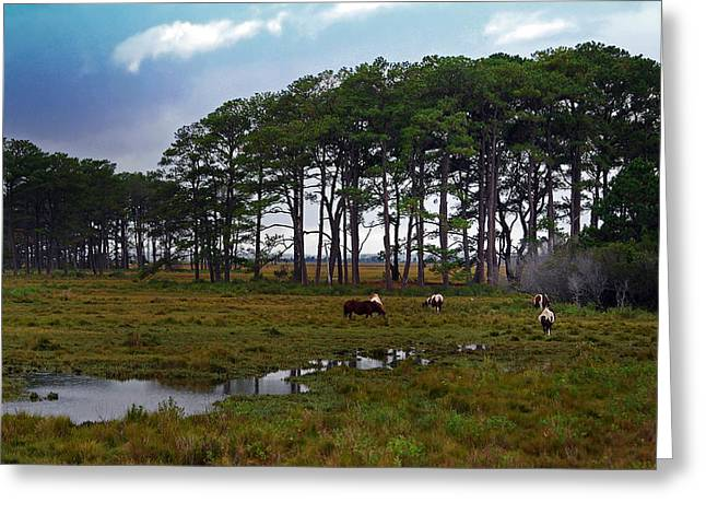 Wild Ponies Of Assateague Greeting Card by Lori Tambakis