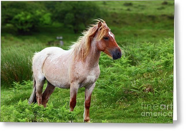 Wild Pony On Bodmin Moor Greeting Card