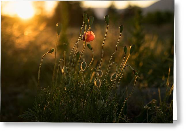 Wild Poppies Greeting Card by Ian Riddler