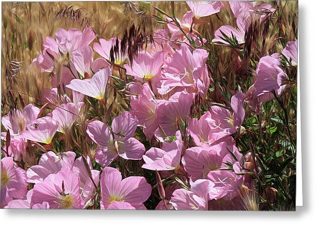 Wild Primrose Greeting Card by Donna Kennedy