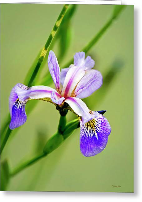 Iris Flower Greeting Card