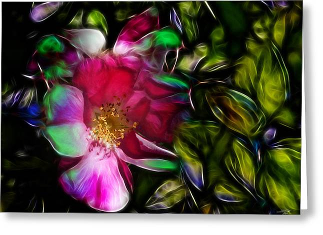 Wild Rose - Colors Greeting Card by Stuart Turnbull