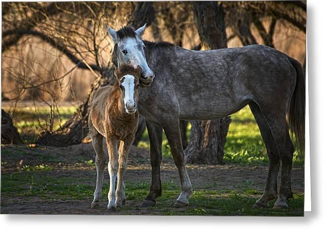 Wild Salt River Horse Love Greeting Card