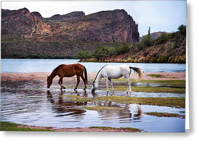 Greeting Card featuring the photograph Wild Salt River Horses At Saguaro Lake Arizona by Dave Dilli