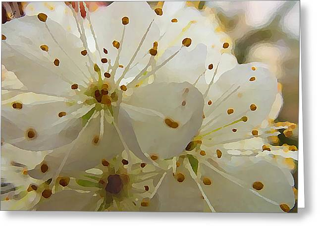 Wild Sand Plum  Greeting Card