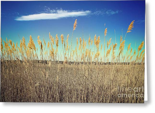 Greeting Card featuring the photograph Wild Sea Oats by Colleen Kammerer