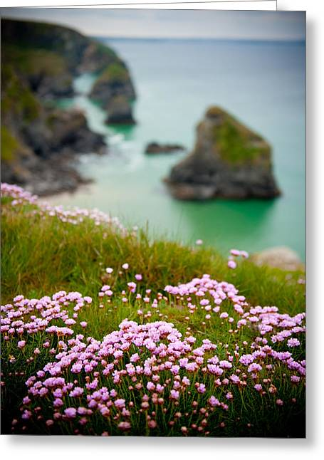 Wild Sea Pinks In Cornwall Greeting Card