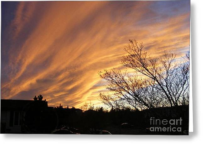 Wild Sky Of Autumn Greeting Card by Barbara Griffin