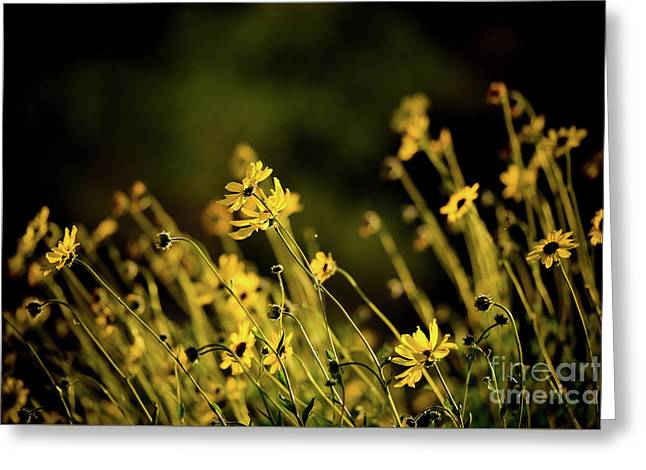 Greeting Card featuring the photograph Wild Spring Flowers by Kelly Wade