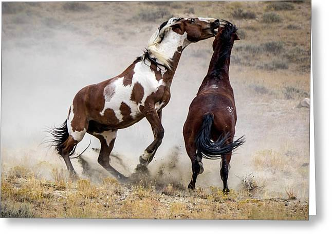 Wild Stallion Battle - Picasso And Dragon Greeting Card