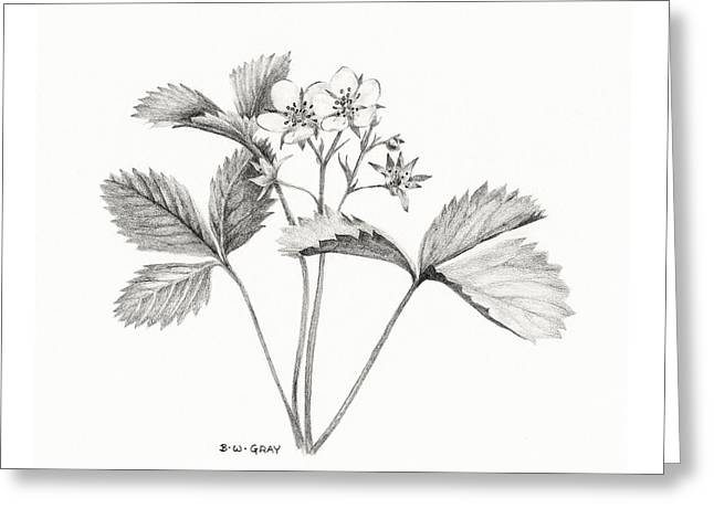 Wild Strawberry Drawing Greeting Card
