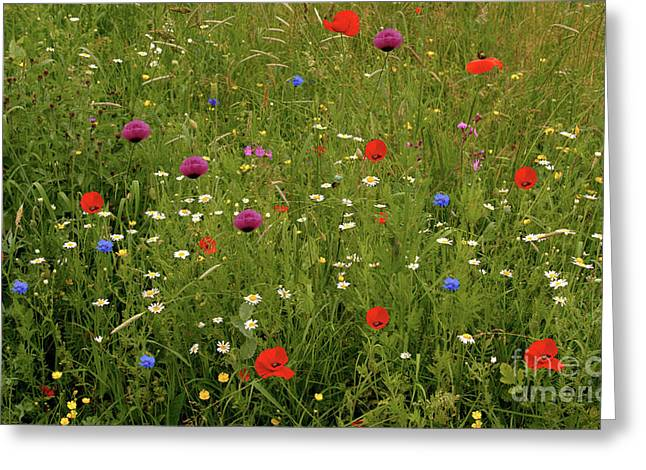 Wild Summer Meadow Greeting Card