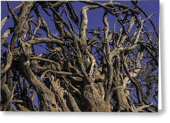 Wild Tangled Tree Roots Greeting Card by Garry Gay