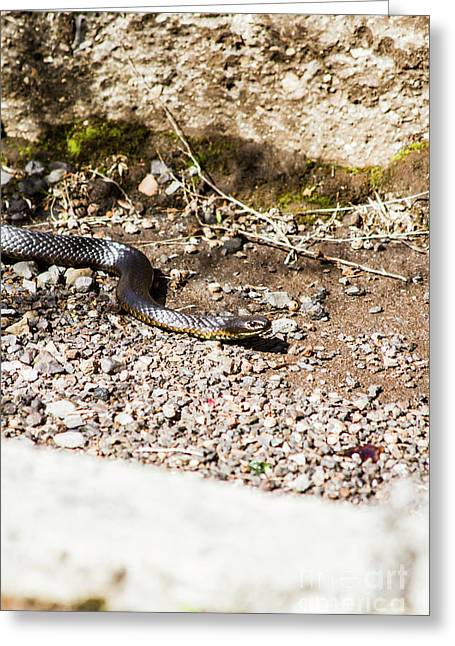 Wild Tiger Snake Greeting Card
