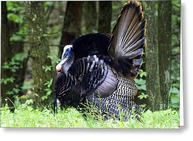 Wild Turkey 1 Greeting Card by Marty Koch