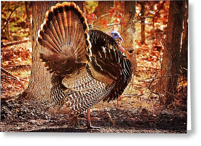 Greeting Card featuring the photograph Wild Turkey by Angel Cher