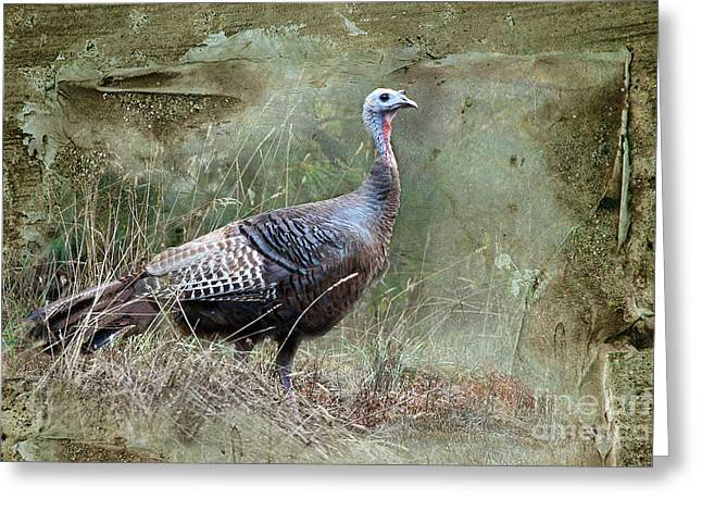 Greeting Card featuring the photograph Wild Turkey by Jan Piller