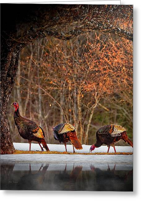 Wild Turkey Winter Greeting Card by Bob Orsillo