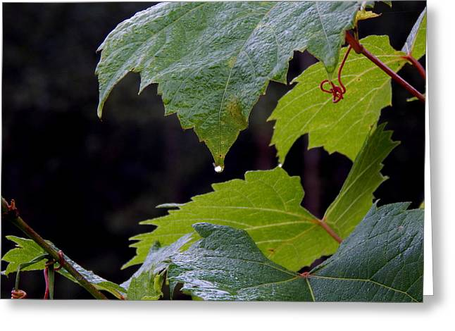 Wild Vines Taking Over Greeting Card by Wild Thing