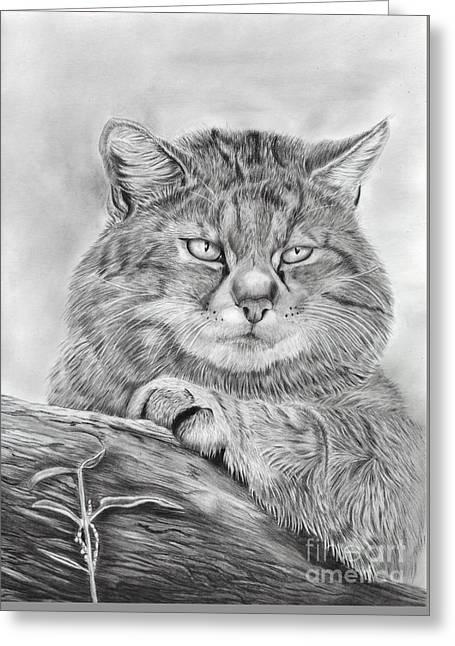 Wildcat Watch Greeting Card
