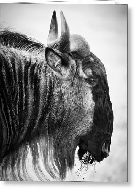 Wildebeest Greeting Card by Adam Romanowicz
