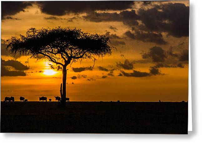Wildebeest At Dusk Greeting Card