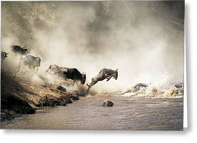Wildebeest Leaping In Mid-air Over Mara River Greeting Card