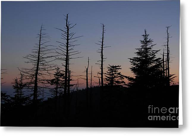 Wilderness Greeting Card by David Lee Thompson