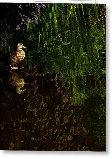Wilderness Duck Greeting Card