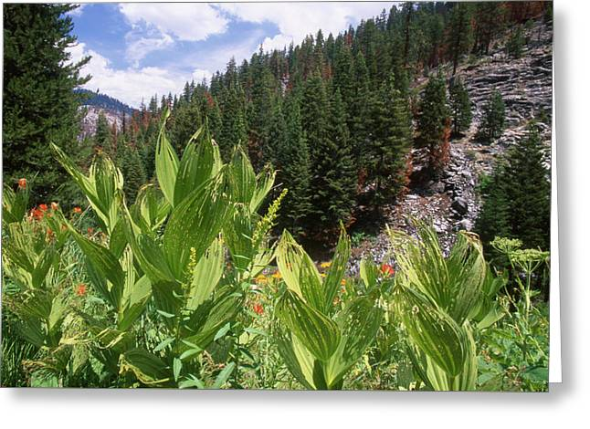 Wilderness Expedition Greeting Card by Soli Deo Gloria Wilderness And Wildlife Photography