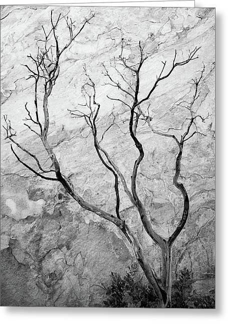 Wildfire Manzanita Greeting Card