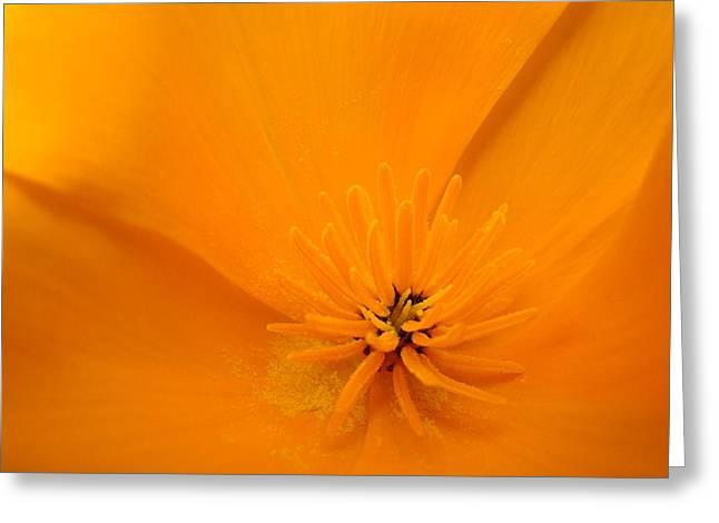 Wildflower Art Poppy Flower 6 Poppies Artwork Prints Cards Greeting Card by Baslee Troutman