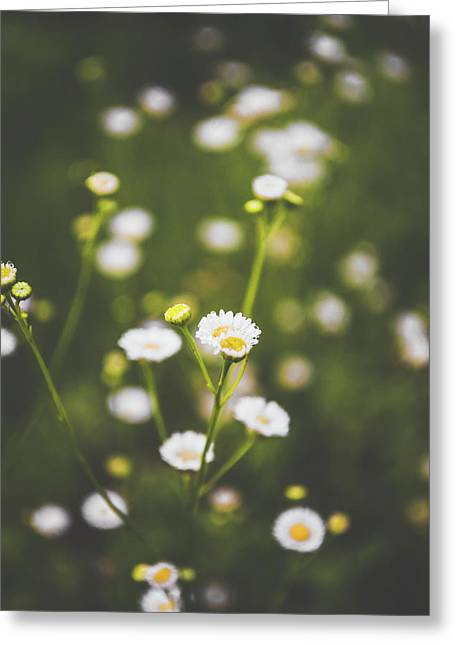 Greeting Card featuring the photograph Wildflower Beauty by Shelby Young