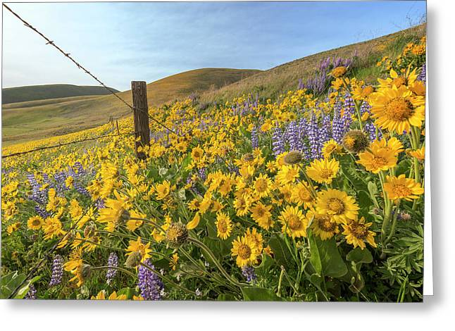 Wildflower Bonanza Greeting Card