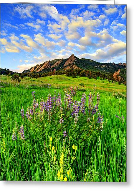 Wildflower Colors Greeting Card by Scott Mahon