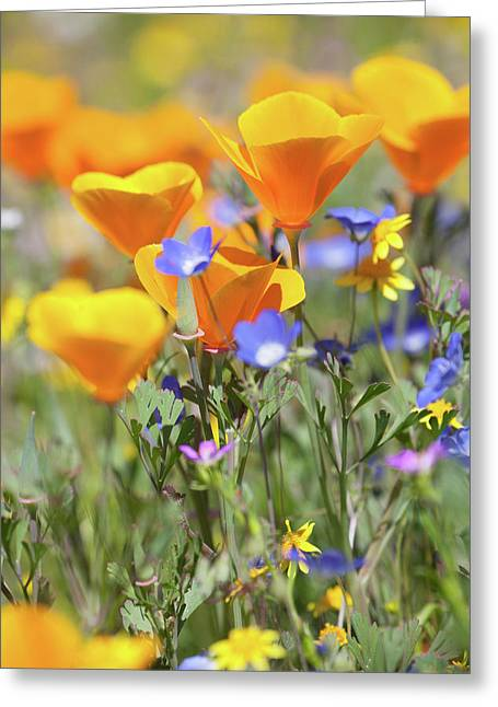 Greeting Card featuring the photograph Wildflower Detail by Cliff Wassmann