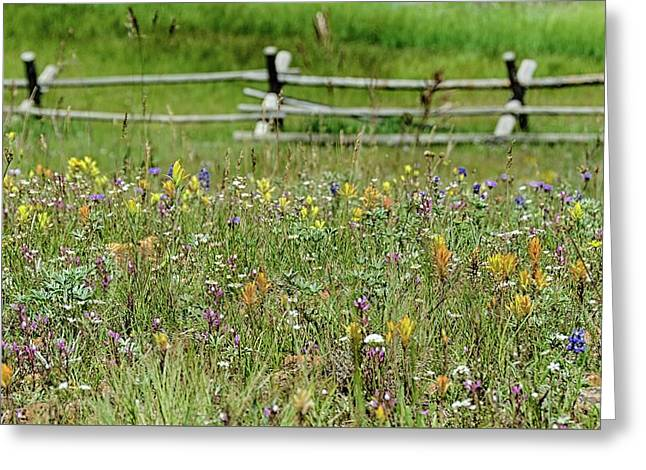 Wildflower Fence Greeting Card